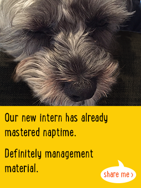 Our new intern has already mastered naptime. Definitely management material.