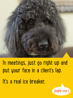In meetings, just goright up and put your face in a client's lap. It's a real ice breaker.