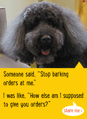 Someone said, 'Stop barking orders at me.' I was like, 'How else am I supposed to give you orders?'