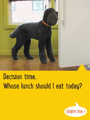 Decision time. Whose lunch should I eat today?