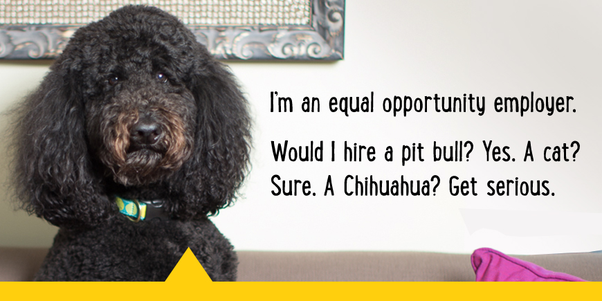I'm an equal opportunity employer. Would i hire a pitbull? Yes. A cat? Sure. A Chihuahua? Get serious.